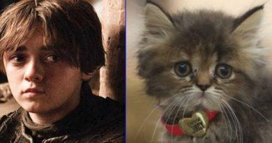 Így néznének ki a Trónok harca szereplői macskaként… :D :D