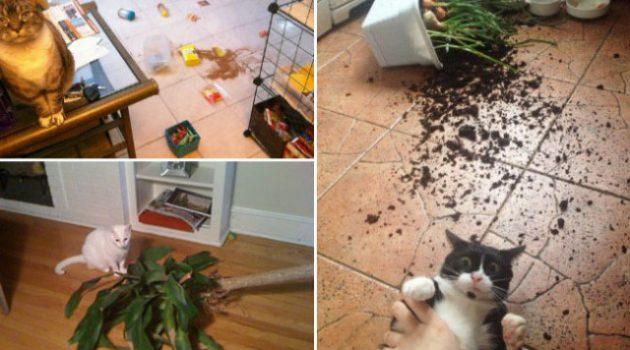 Macskák, akiknek fogalmuk sincs, hogy ki csinálhatta a felfordulást
